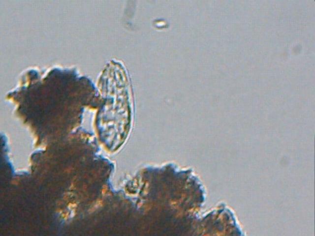 Astrotreff astronomie treffpunkt lidl mikroskop